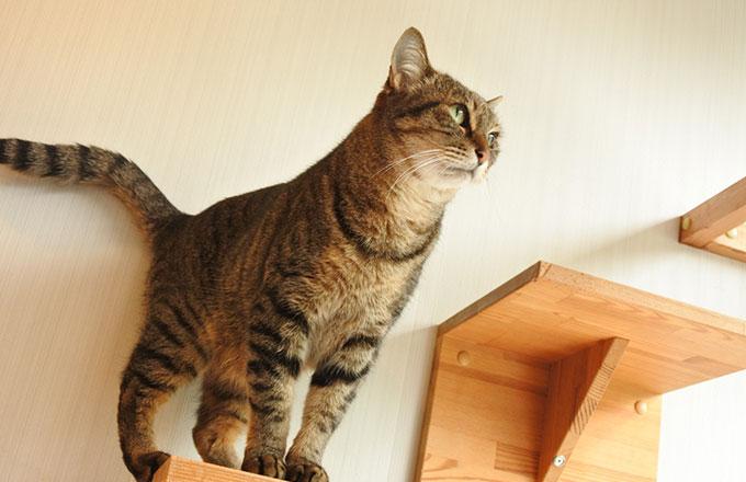 猫と幸せに暮らす家づくり